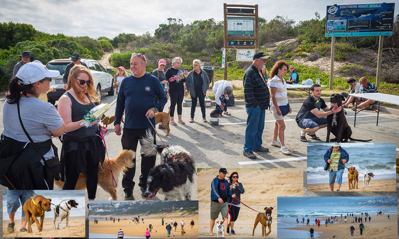 caws4paws, dogs, animals, charity, help